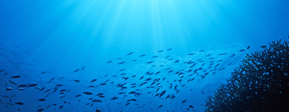 A shoal of fish deep underwater