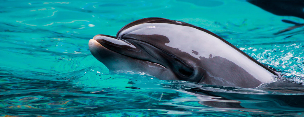 close up of a dolphin's head